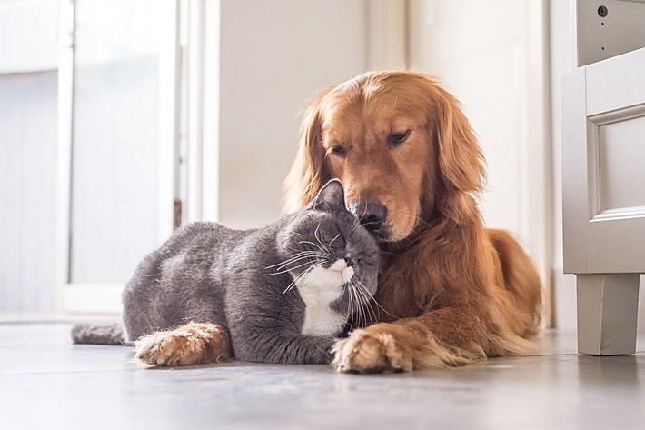 ペット飼育可できるマンション