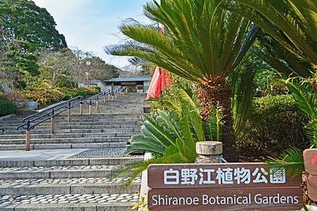 植物がたくさん(^^)/白野江植物公園♬