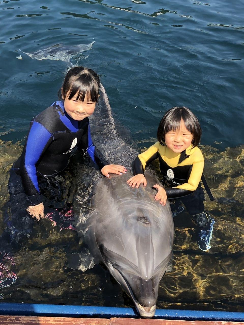 私の姪っ子達です♪水泳が大好きでイルカと一緒に泳いでました(*´▽`*)私もいつか、、、イルカに乗りたいと思います!!